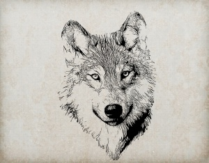 wolf-portrait-illustration